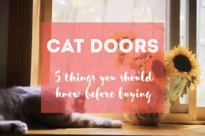 5 Things You Should Know Before Buying a Cat Door   Fluffy Kitty