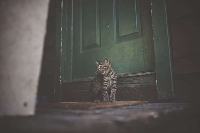 5 Things You Should Know Before Buying a Cat Door | Fluffy Kitty