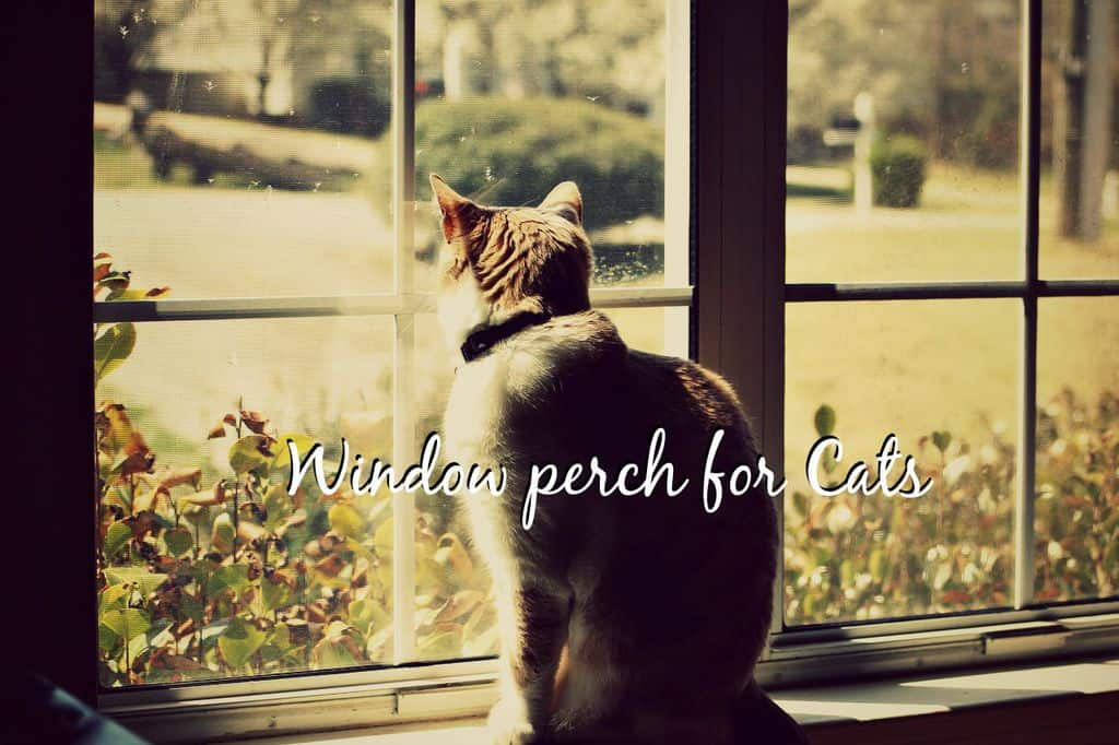 Window perch for cats featured image
