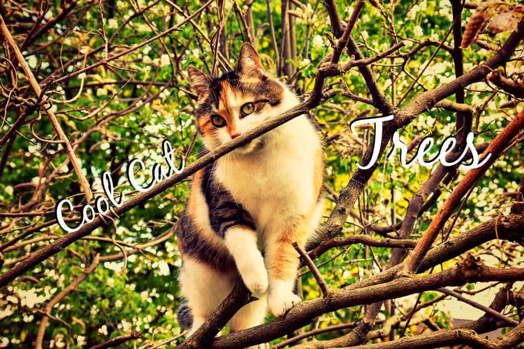 cool cat trees header