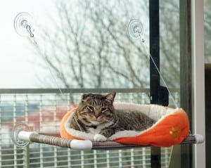 kitty cot image
