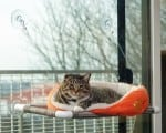 kitty-cot-image-300x239