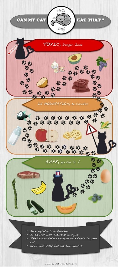 Human food that cats can eat infographic