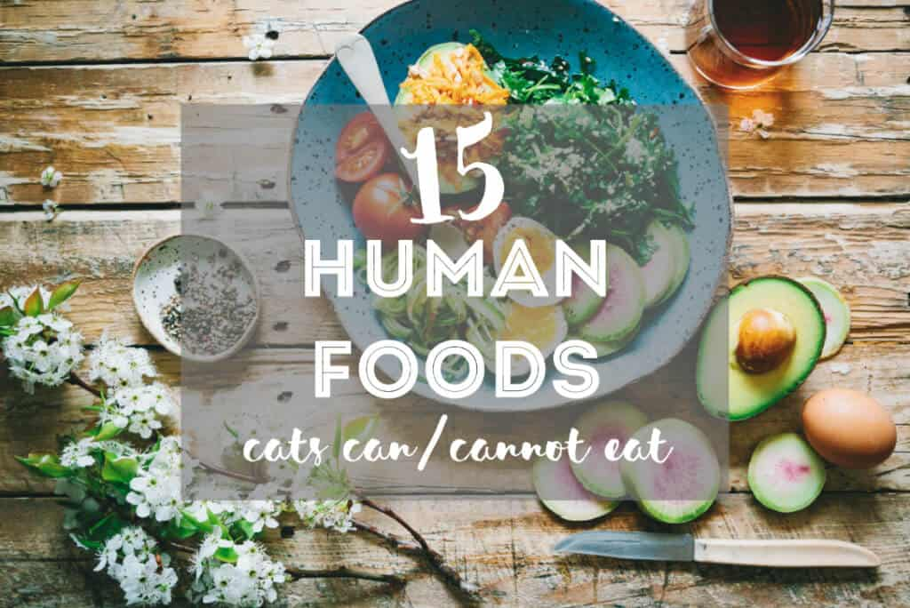 Human Food that Cats Can Eat // 15 Safe & Toxic People Foods for Cats | Fluffy Kitty Blog