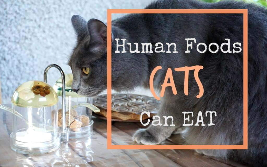 Human food that cats can eat
