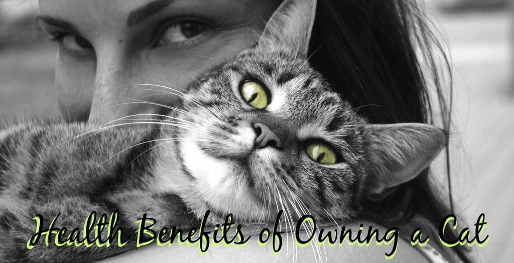Health Benefits of Owning a Cat