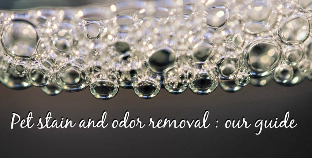 best pet stain and odor removal reviews