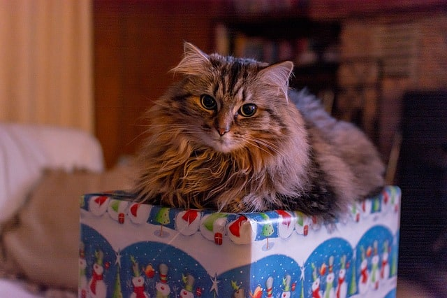 tips on how to keep your cat safe for christmas