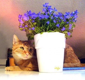 train your cats from eating plants