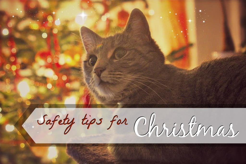 cat safety tips for christmas