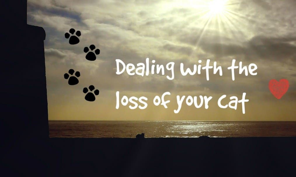 Dealing with the loss of your cat header