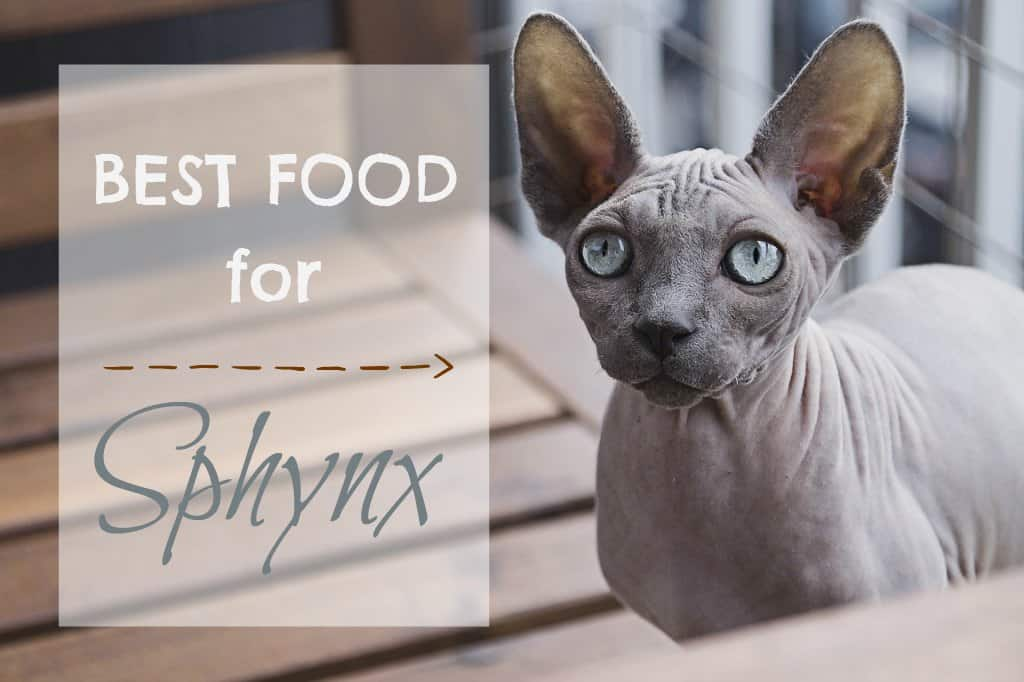 best cat food for sphynx