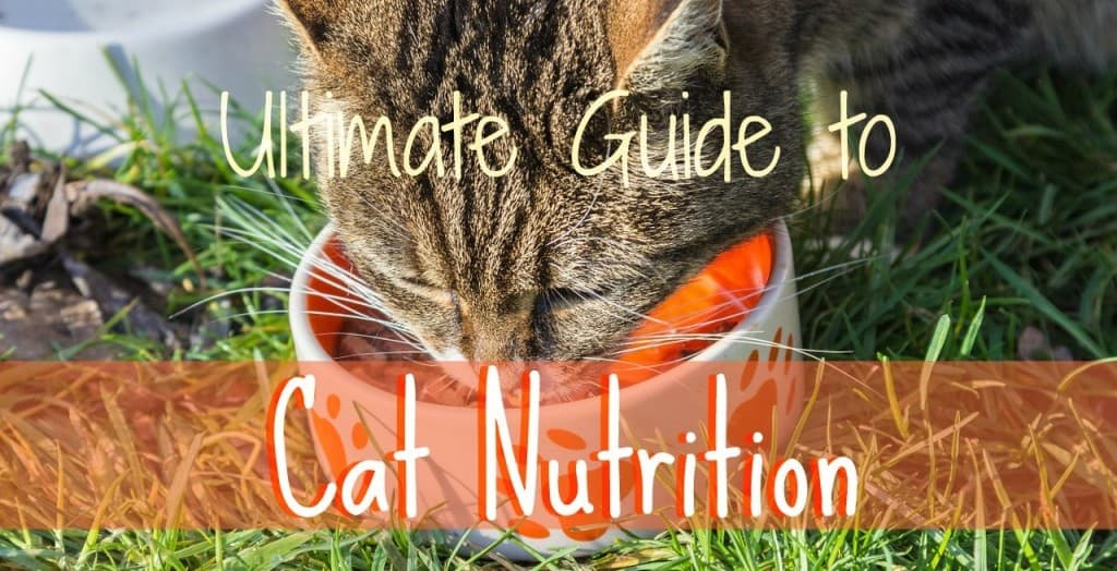 Cat Nutrition