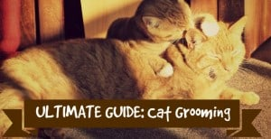 how to groom your cat at home header