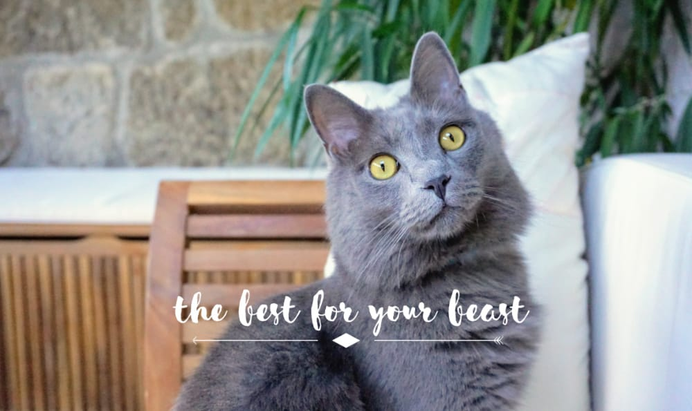 Fluffy Kitty | Best for Your Beast