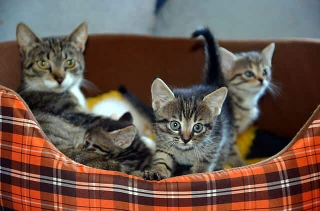 My Cat Had Kittens Can I Move Them | Fluffy Kitty