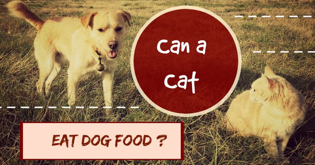 can a cat eat dog food header