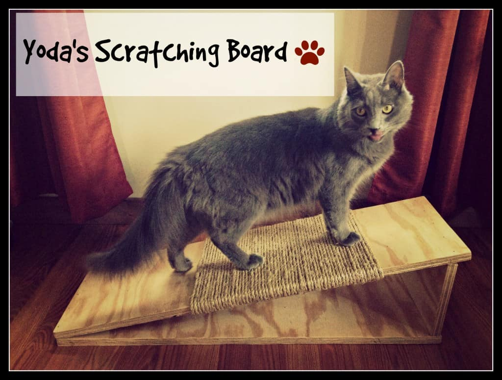 how to make a cat scratching board