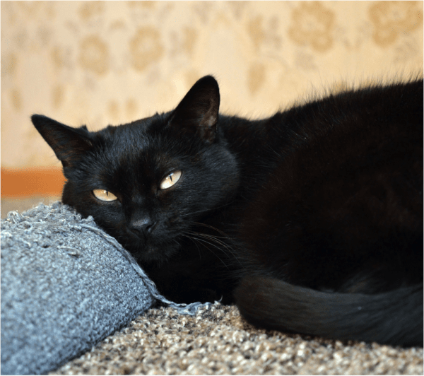 what is cat scratching post made of