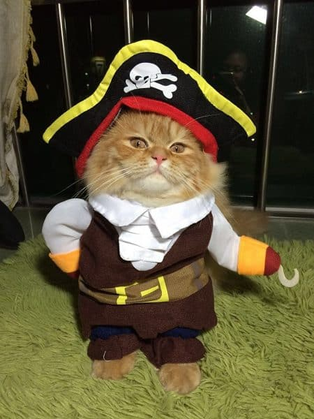 pirate-cat best halloween costumes for cats