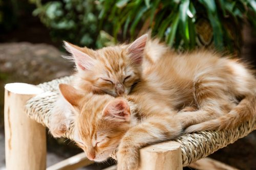melatonin for kittens