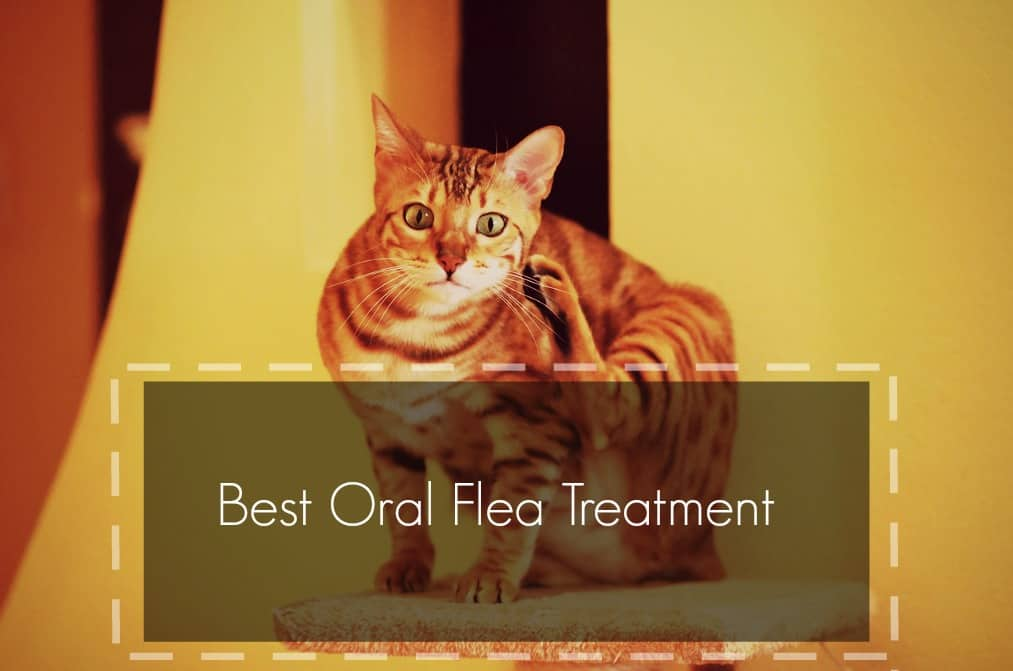 best oral flea treatment for cats header