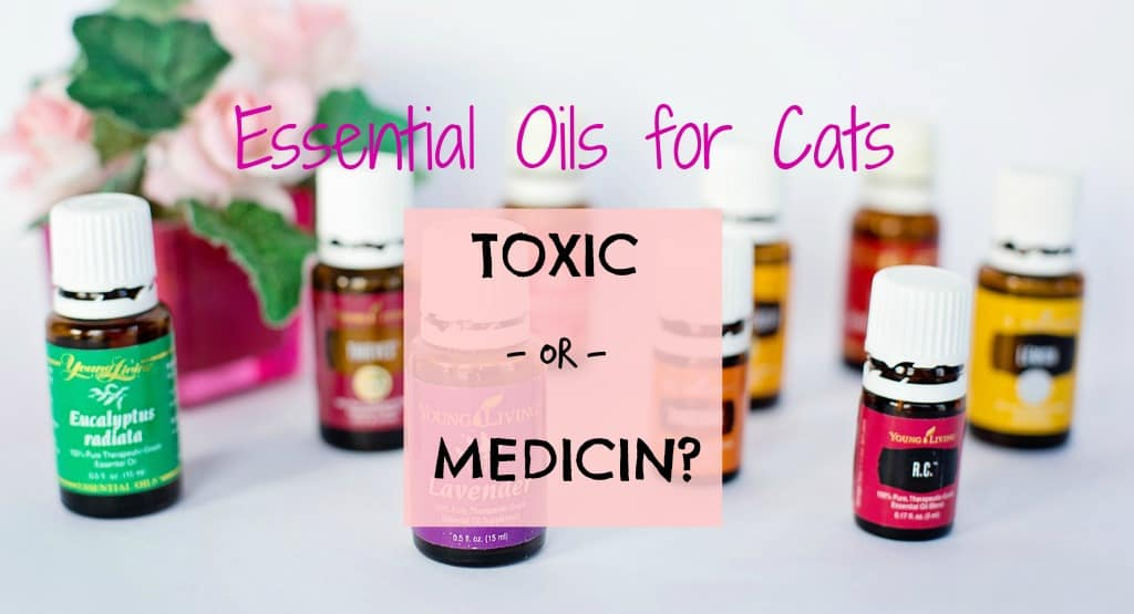 Can I Use Essential Oils on My Cat ? Fluffy Kitty
