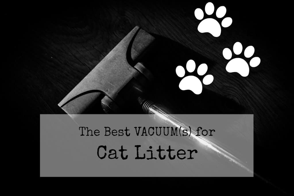 best vacuum for cat litter header