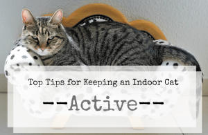 keep an indoor cat active