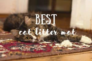 Best Cat Litter Mat | Fluffy Kitty