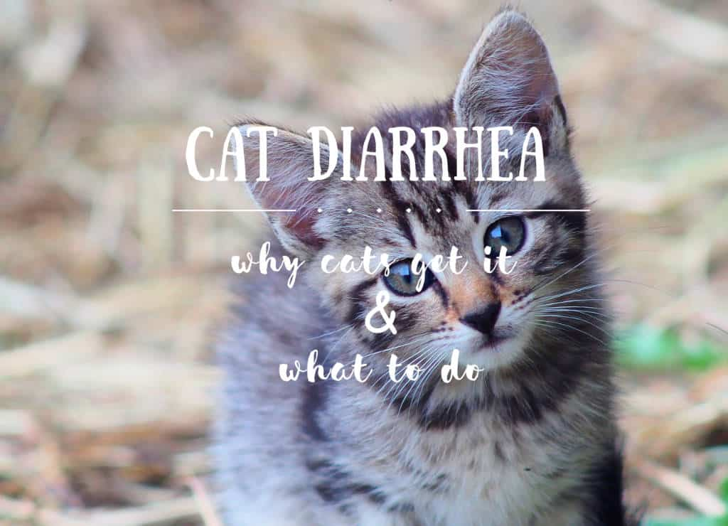 my cat has diarrhea but seems fine / Fluffy Kitty