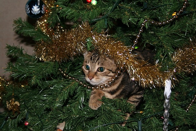 How to Cat Proof a Christmas Tree | Fluffy Kitty