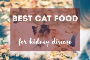 Best Cat Food for Kidney Disease | Fluffy Kitty
