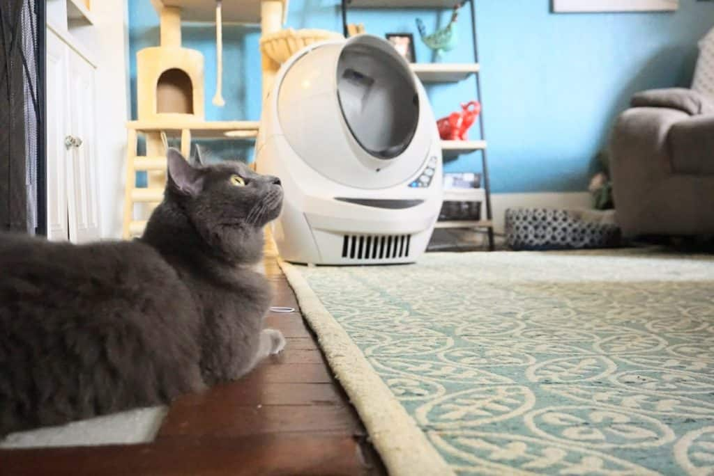 litter robot iii open air with connect review fluffy kitty