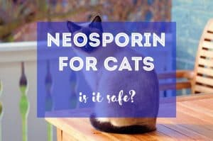 Is Neosporin Safe for Cats?   Fluffy Kitty