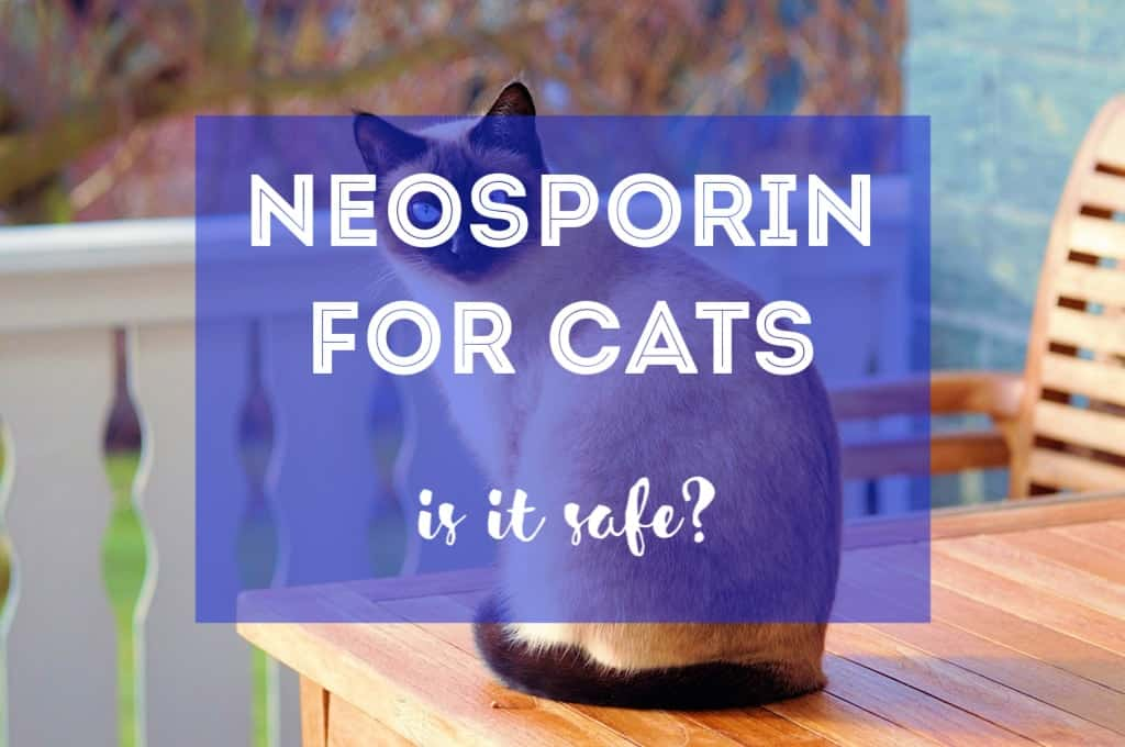Is Neosporin Safe for Cats? | Fluffy Kitty