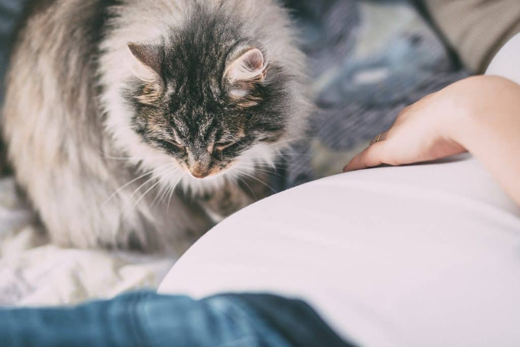 Ultimate Guide to Cat Allergies: Causes, Symptoms, & Treatment