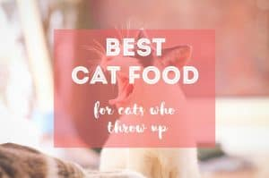 Best Cat Food for Cats Who Throw Up | Fluffy Kitty