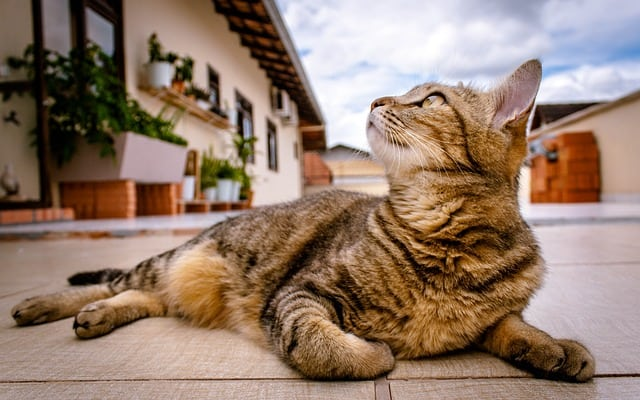 How to Keep Your Cat Cool in the Summer | Ultimate Guide | Fluffy Kitty