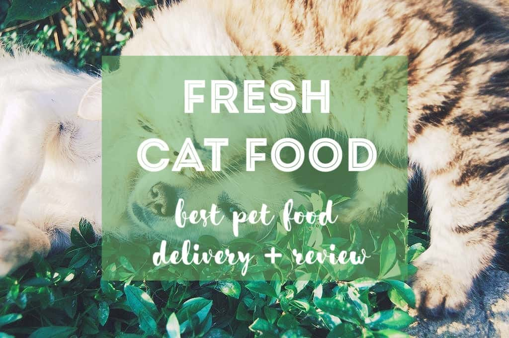 Best Fresh Pet Food Delivery | Fluffy Kitty