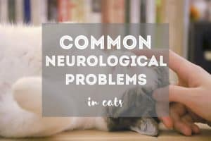 Common Neurological Problems in Cats | Fluffy Kitty