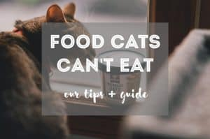 Foods Cats Can't Eat | Fluffy Kitty