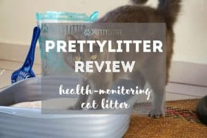 PrettyLitter Review | Fluffy Kitty