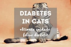 Diabetes in Cats | Guide to Feline Diabetes - Fluffy Kitty Blog