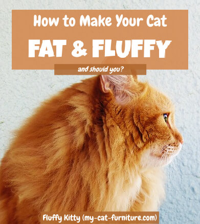 How to Make Your Cat Fat and Fluffy   Fluffy Kitty