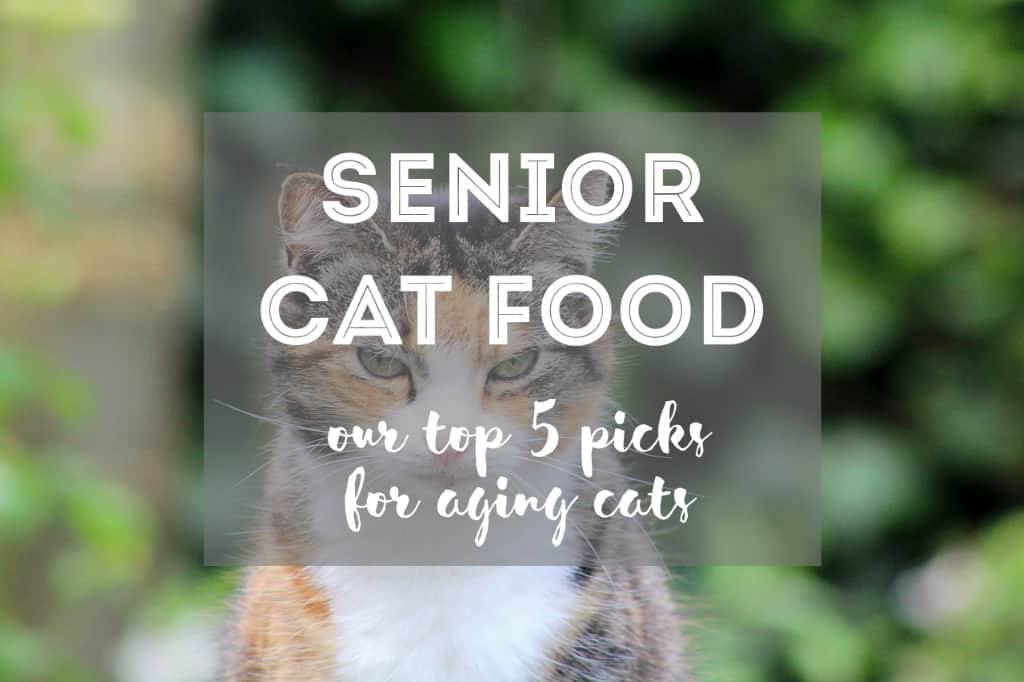 Best Food for Senior Cats | Fluffy Kitty