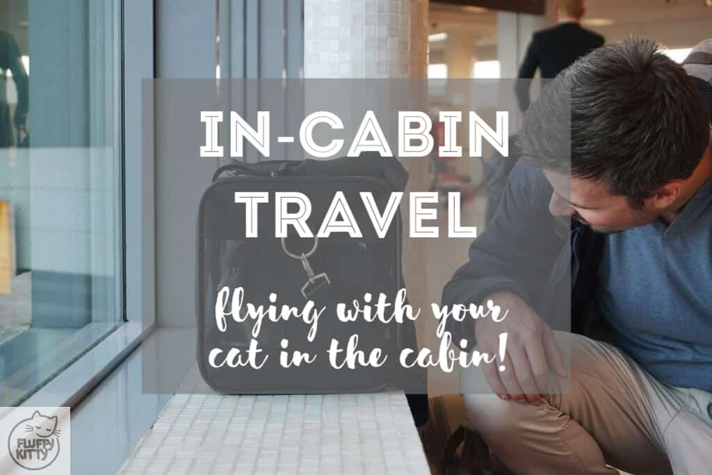 Flying with Your Cat in the Cabin | Fluffy Kitty