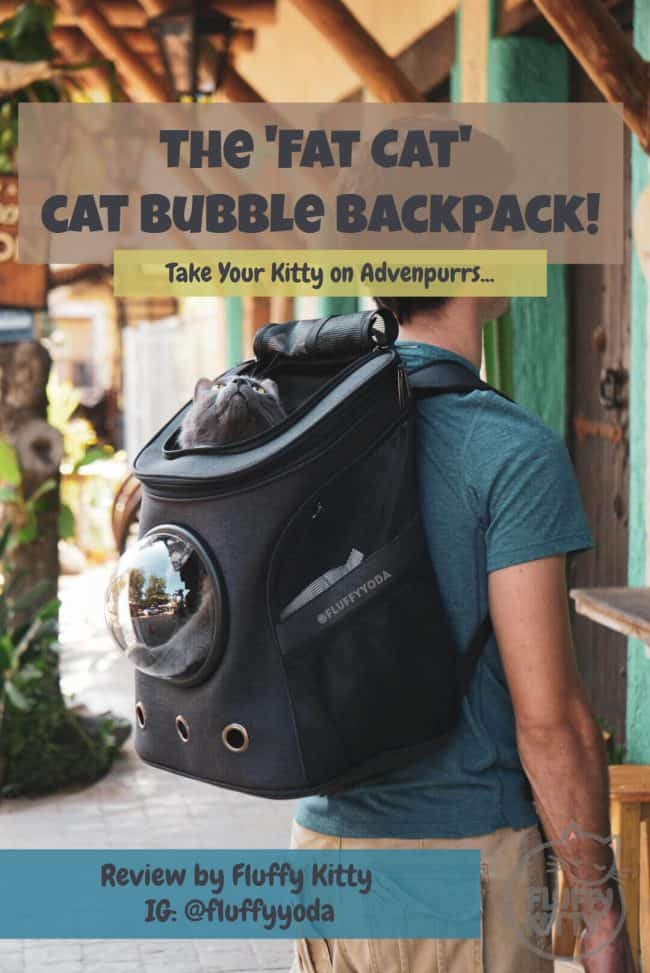 Fat Cat Backpack Review Your Cat Backpack | Fluffy Kitty