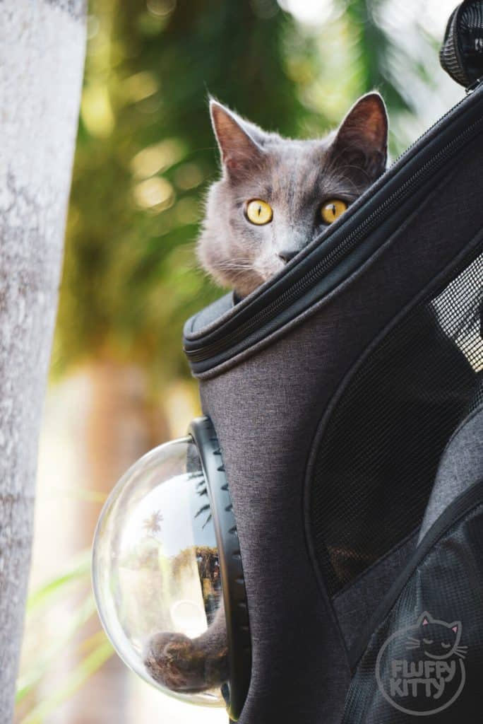 Fat Cat Backpack Review by Fluffy Kitty Blog