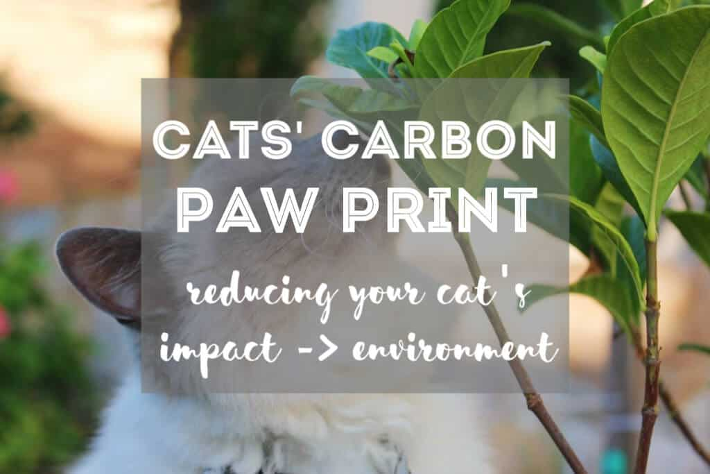How to Reduce Your Cat's Carbon Paw Print | Fluffy Kitty